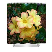 Rhododendron 'toff' Shower Curtain