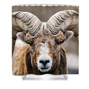 Rocky Mountain Big Horned Sheep Shower Curtain