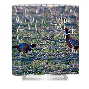 2 Roosters  Shower Curtain