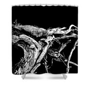 Roots 1 Shower Curtain