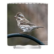 Rose Breasted Grosbeak Shower Curtain