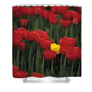 Rows Of Red Tulips With One Yellow Tulip Shower Curtain