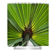 Saw Palmetto  Shower Curtain