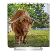 Scottish Highlander Ox Shower Curtain