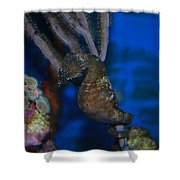 Seahorse And Coral Shower Curtain