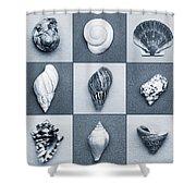 Seashell Composite Shower Curtain
