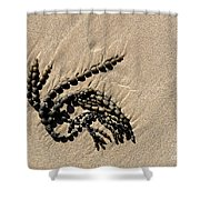 Seaweed On Beach Shower Curtain