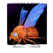 Sem Of A Fly Drosophila Shower Curtain