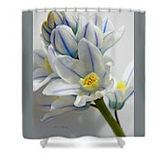 Siberian Squill  Shower Curtain