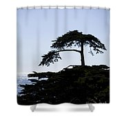 Silhouette Of Monterey Cypress Tree Shower Curtain