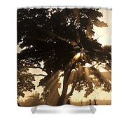 Silhouetted Tree With Sun Rays Shower Curtain
