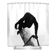 Simang Shower Curtain