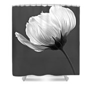 Simply Beautiful In Black And White Shower Curtain