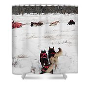 Sled Dog Shower Curtain