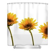 Small Sunflowers Or Helianthus Shower Curtain