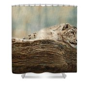Snow Leopard Shower Curtain