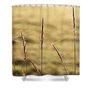 Spider Webs In Field On Tall Grass Shower Curtain