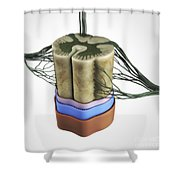 Spinal Cord Shower Curtain
