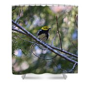 Spring Black-throated Green Warbler Shower Curtain