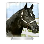 Stallion Shower Curtain by Paul Tagliamonte