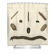 Strange Insects Shower Curtain