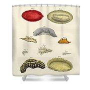 Strange Molluscs Shower Curtain
