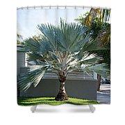 Street Scenes In Key West Shower Curtain