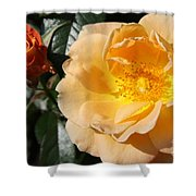 Summer's  Rose Love Shower Curtain