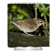 Swainsons Warbler Shower Curtain
