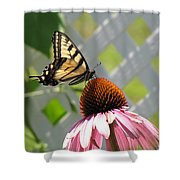 Tiger Swallowtail On Coneflower Shower Curtain
