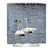 2 Swans Shower Curtain