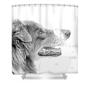 Sweet Puppy Shower Curtain
