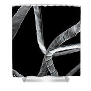 Tapeworm Cestoda Shower Curtain