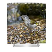 Tennessee Warbler Shower Curtain