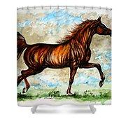 The Chestnut Arabian Horse Shower Curtain