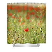 The First Poppy Of The Field Shower Curtain