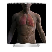 The Respiratory And Digestive Systems Shower Curtain