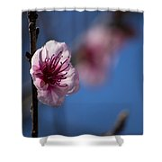 The Spring Is Coming Shower Curtain