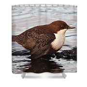 The White-throated Dipper Shower Curtain