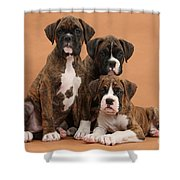 Three Boxer Puppies Shower Curtain