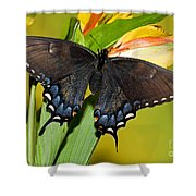 Tiger Swallowtail Butterfly, Dark Phase Shower Curtain