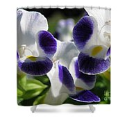 Torenia From The Duchess Mix Shower Curtain by J McCombie