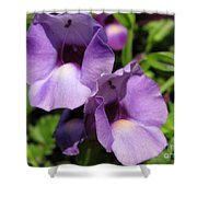 Torenia Named Purple Moon Shower Curtain