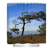 Torrey Pines State Park - California Shower Curtain