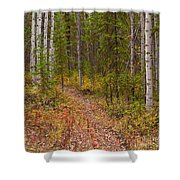 Trail In Golden Aspen Forest Shower Curtain