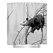 Treed Opossum Shower Curtain