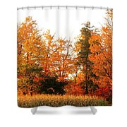 Trees Of Fall Shower Curtain
