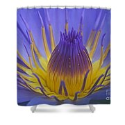 Tropic Water Lily 16 Shower Curtain