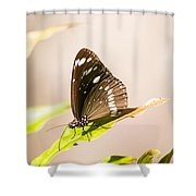 Tropical Butterfly Shower Curtain