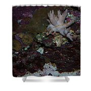 Tropical Coral Shower Curtain